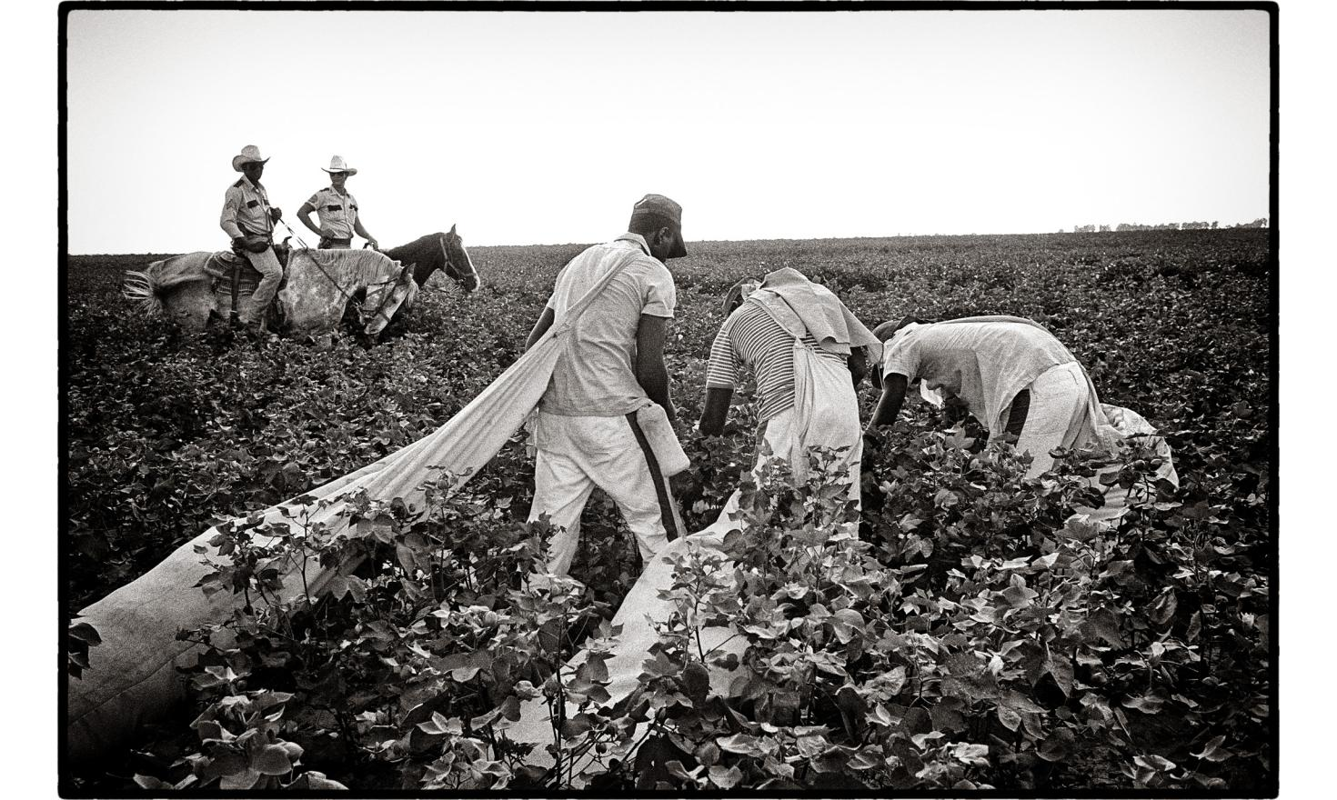 Mississippi State Penitentiary (MSP), also known as Parchman Farm, is a prison farm, the oldest prison, and the only maximum security prison for men in the state of Mississippi. Death penalty is still enforced. Prisonniers pick up cotton by hand - 1986.