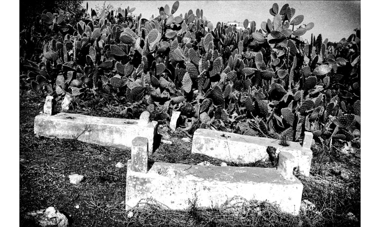"""Cemetery of the Arab village of """"Blad ash Sheikh."""" The village was destroyed during the war of independence in 1948. Near Haifa, Israel. November 2004."""