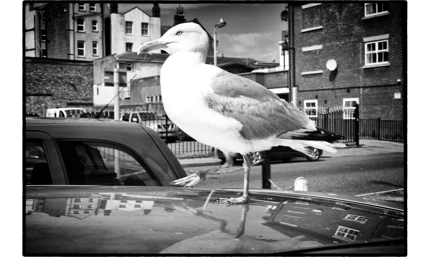Seagulls are pretty friendly, and there are a lot of them standing and flying around. Clacton on sea, England. July 2016.