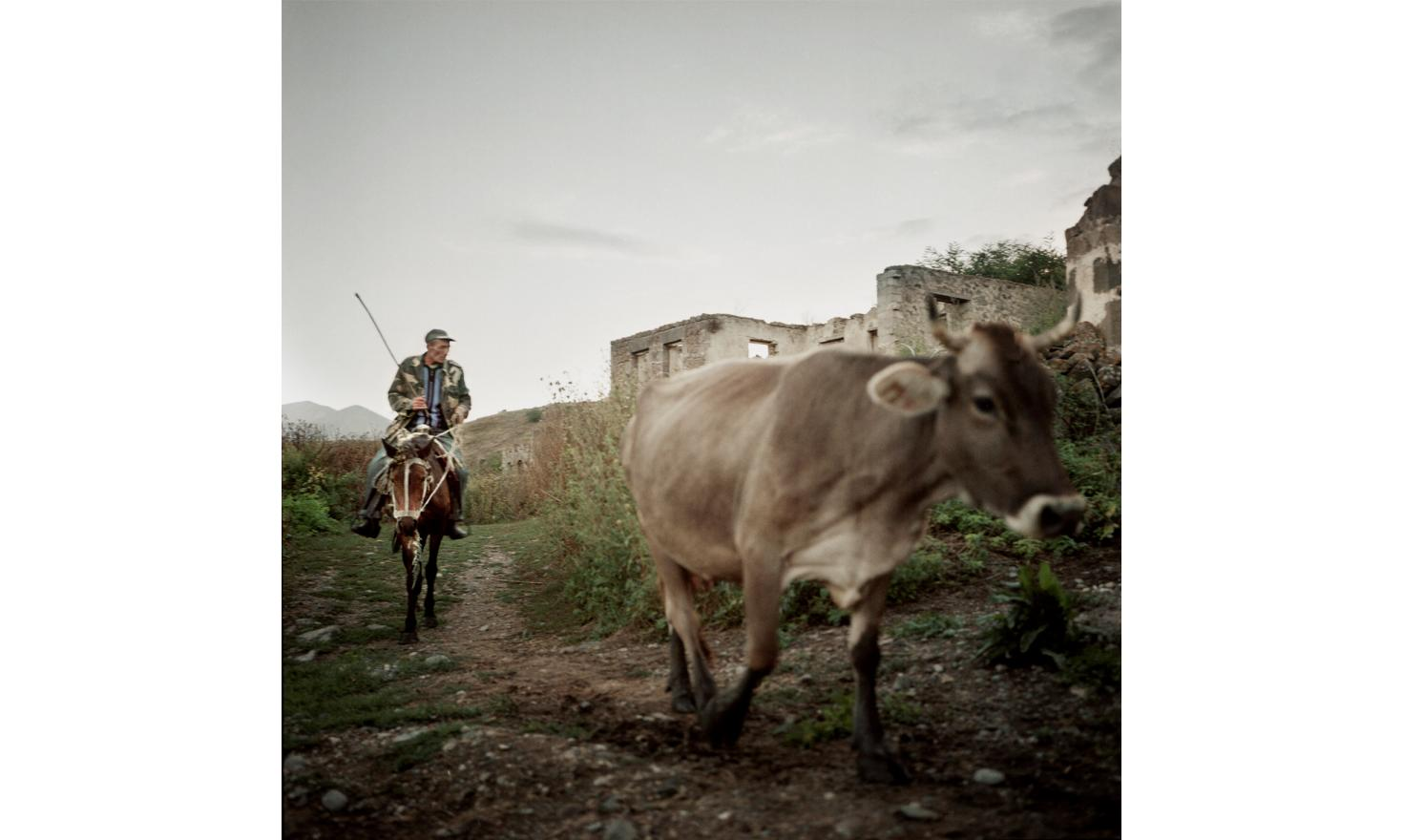 Hak, Kashatagh (Lachin) province. The shepherd comes back from the pasture at night. All the villagers pay him to take care of the beasts. Many inhabitants have beasts even if they are not all farmers. Their idea is to insure a food self-suffiency.