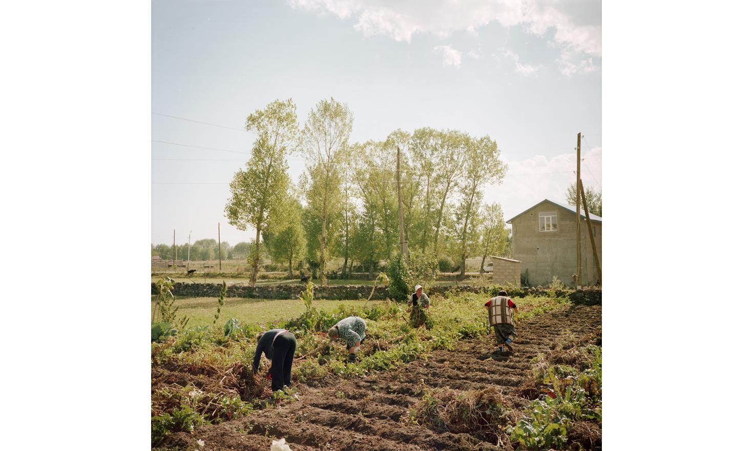 The children of Tamara (2nd from the left) are in Russia so she has to harvest potatoes. Her neighbors came to give her a hand. Without men, the solidarity between women neighbors and friends can lighten the work tasks.